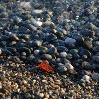 Осень приходит и на Черное море! :: Михаил Поскотинов