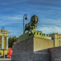 Самый популярный представитель львиного сообщества Петербурга :: Valeriy Piterskiy