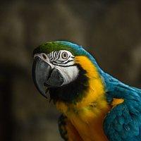 говорящий попугай Кеша :: alex graf