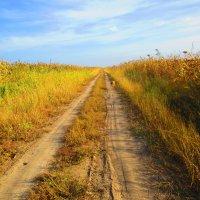 Меж кукурузных полей. :: Татьяна ❧