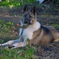 Соседский пёс :: Татьяна Соловьева