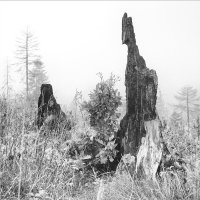 Победа над лесными пожарами :: Jiří Valiska