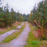 Осенняя дорога :: Александр Кокоулин