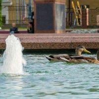 Парочка в фонтане :: Александр Витебский