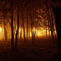 туманный парк :: Седа Ковтун