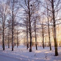 Зимний парк 2015 :: Ирина Кузина