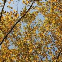 Гобеленовая осень :: Наталья Золотых-Сибирская