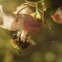 кто нашел паука ставь лайк! :: Андрей Выровой