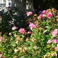 Розы в осеннем парке... :: Тамара (st.tamara)