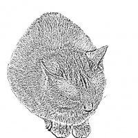 cat :: Юлия Денискина