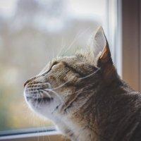 Котик Соня. Кто там?) :: Дмитрий