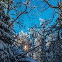 Небеса сквозь веток вязь :: Андрей Поляков