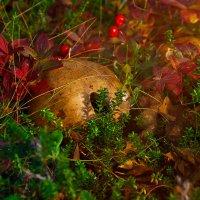 Осенний лес :: Elena Kovach