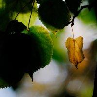 осень :: Михаил Денисов