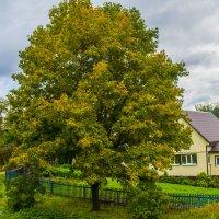 Горская осень! :: Павел Данилевский