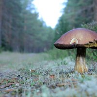 Сторож леса :: Наталья