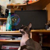 Мыльные пузыри - это интересно :: Оксана Пучкова