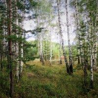 В лесу... :: Valentina
