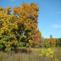 Осенний день :: марина ковшова