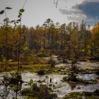 Просто болото! :: Ирина Антоновна