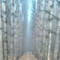 Туман :: Дмитрий