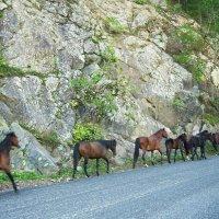 Путь на горное пастбище :: Надежда