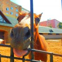 лошадь :: Таня