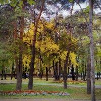 Осень в парках и скверах Москвы. :: Владимир Безбородов