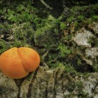 """""""Березовые апельсины"""" :: Va-Dim ..."""