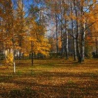 Парк :: Виктор Бондаренко