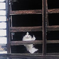 кошкин дом.... :: александр дмитриев