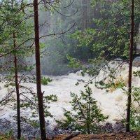 Река Суна. :: Ирина Нафаня