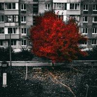 Кровавая осень :: Роман Шершнев