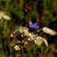 цветы осени 5 :: Александр Прокудин