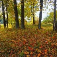 На ковре из желтых листьев :: Павлова Татьяна Павлова