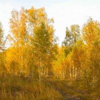 Осень :: Владимир Савельев