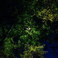 Луна и ветки, ночь прекрасна :: Света Кондрашова
