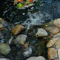 Камни и вода :: Света Кондрашова