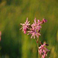 полевые цветы :: Galina G