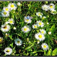 солнечный осенний день ... :: Ivana