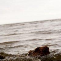 Финский залив. Лахта :: Семья Фоменковых