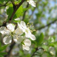 Воспоминания о весне :: Grey Bishop