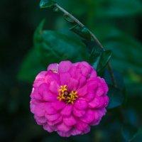 Цветочки в цветочке. :: Андрей Нибылица