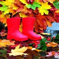 Яркие краски осени :: Марина Романова