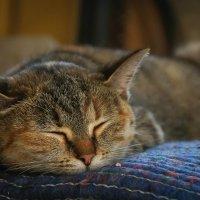 Спящая красавица :: Наталья Мальцева