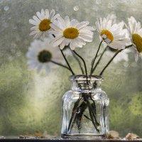 Осенние ромашки. :: Елена Куценко