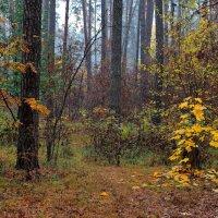 Словами грусти опадают листья... :: Лесо-Вед (Баранов)
