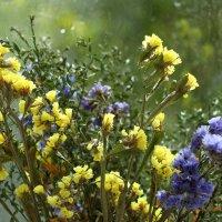 Полевые цветы :: Dr. Olver  ( ОлегЪ )