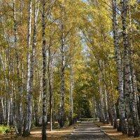 Золотая осень :: grovs