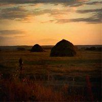 Вечер на поле :: Лариса Димитрова